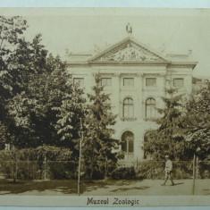 BUCURESTI - MUZEUL ZOOLOGIC -SEPIA - PERIOADA INTERBELICA, Necirculata, Fotografie