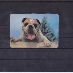 CCO - CALENDAR DE COLECTIE - TEMATICA ANIMALE DE COMPANIE - CAINI - ANUL 1993
