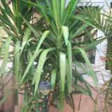 Flori exotice