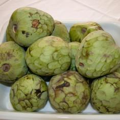 CHERIMOYA sau ARBORELE de ÎNGHEȚATĂ (annona cherimola) - plante - Pomi fructiferi