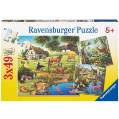 Puzzle Paudre, Zoo Si Animale Domestice, 3X49 Piese