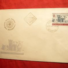 Plic FDC - Cosmos - Leika -Bulgaria 1961, 1 val.