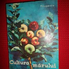 Cultura marului (pomicultura) an 1967/218pagini-Fl.Lupescu - Carti Agronomie