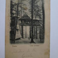 RARA! CARTE POSTALA SINAIA CUIBUL PRINTESEI 1906 - Carte Postala Muntenia dupa 1918, Azuga, Circulata, Printata