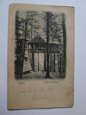 CARTE POSTALA SINAIA CUIBUL PRINTESEI 1906 foto