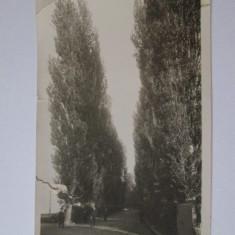 RARA! CARTE POSTALA TIP FOTOGRAFIE CALAFAT ANII 30 - Carte Postala Oltenia dupa 1918, Necirculata, Printata