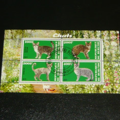 Colita stampilata - NATURA - ANIMALE - Pisici - BURUNDI - 2011  -  2+1 gratis toate produsele la pret fix - RBK7766