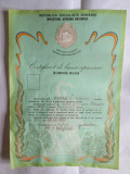 Cumpara ieftin CERTIFICAT DE BUNA APRECIERE IN SERVICIUL MILITAR 1982