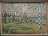 PADURE cu MESTECENI ,   veche PICTURA in ULEI   semnata si datata 1947  ,  inramata  /  tablou