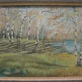 PADURE cu MESTECENI, veche PICTURA in ULEI semnata si datata 1947, inramata / tablou - Pictor strain, Peisaje