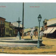 887 - Buzau, RM. SARAT, Victoriei street - old postcard - unused