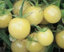 """Seminte rosii """" White Cherry """" foto mare"""
