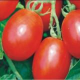 """Seminte """"Rosii alungite"""" - 50 seminte/ plic"""