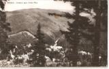 CPI (B4509) SINAIA. VEDERE SPRE VALEA REA, EDITURA MERIDIANE, CIRCULATA, 31.7.1963, STAMPILA, Fotografie