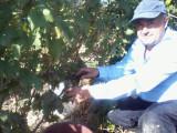 Vin de Pietroasele,Riesling., Alb, Sec