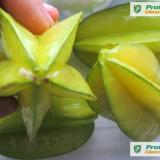 CARAMBOLA (averrhoa carambola) - POM FRUCTIFER EXOTIC - plic cu 10 seminţe