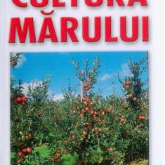 CULTURA MARULUI | L. CHIRA, I.PASCA | Editura Mast - Carte gradinarit