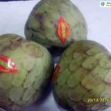 CHERIMOYA sau ARBORELE de ÎNGHEȚATĂ (annona cherimola) - plic cu 20 seminţe