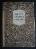 C. BECA - GEOLOGIA SANTIERELOR PETROLIFERE