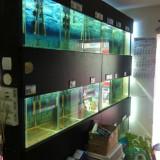 raft acvarii pentru Petshop