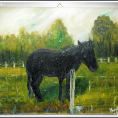 TABLOU / PICTURĂ ÎN ULEI PE PLACAJ GROS - CAL NEGRU ÎN PADOC, SEMNAT VAN KEER R! - Pictor strain, Animale, Realism