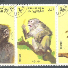 Fujeira Maimute serie stampilata 1972 - Timbre straine, Natura