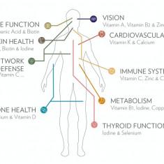 LifePak + Supliment alimentar cu vitamine, minerale si fitonutrienti - Produs sporirea imunitatii