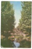% carte postala (ilustrata)-PITESTI-Vedere din Parcul Arges