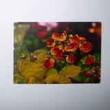 Calceolarie, flori, natura - necirculata - 2+1 gratis - RBK9271 - Carte Postala Transilvania dupa 1918, Fotografie