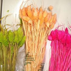 Plante naturale uscate - Talaris - diverse culori