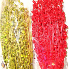Plante naturale uscate - IN decorativ  - diverse culori
