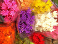 Plante naturale uscate - Nigella orientale - diverse culori