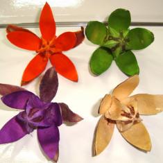 Plante naturale uscate - wild lily - diverse culori