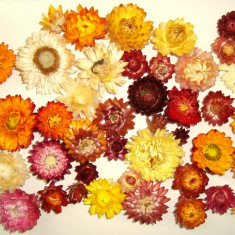 Plante naturale uscate - Capete de flori de paie - culori mixte