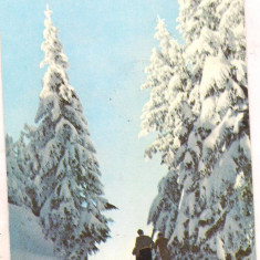% carte postala (ilustrata) -IARNA PE MASIVUL POSTAVARU - Carte postala tematica, Circulata, Printata