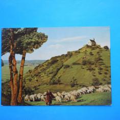 HOPCT 19776 GERMANIA WURMLINGER BERGKAPELLE / CIOBAN CU OILE !!-NECIRCULATA -, Printata
