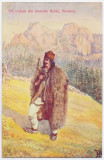 2868 - Bucovina, SUCEAVA, Ethnic, cioban - old postcard - unused, Necirculata, Printata