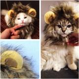 Peruca coama leu pt. pisica catel costum pisici catei caini caine catelus +CADOU