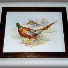 Tablou vechi - litografie pe tabla emailata - tematica fauna - fazani - Arta din Metal