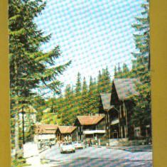 PALTINIS APROX 1980