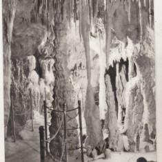 Bnk cp bucuresti - muzeul grigore antipa - vedere din pestera - necirculata - Carte Postala Muntenia dupa 1918