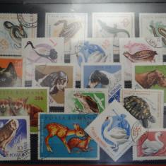 Timbre Romania-Lot Fauna-Animale domestice si salbatice-Reptile - Pasari - F305, Stampilat