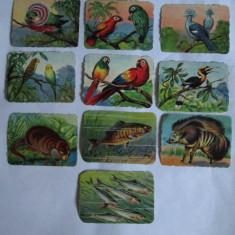 LOT 10 CARTONASE SCOLARE ANIMALE SALBATICE, PASARI SI PESTI 6 X 8 CM DIN ANII 30 - Cartonas de colectie