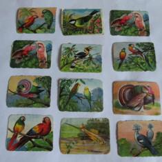 LOT 12 CARTONASE SCOLARE PASARI 6 X 8 CM DIN ANII 30 - Cartonas de colectie
