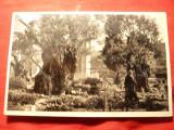 Ilustrata - Palestina- Ierusalim - Gradina Ghethsemani , circulat , anii '30, Circulata
