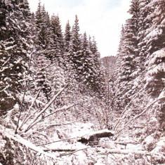 Ok-1550- Romania, Maramures carte postala necirculata: Izvorul Suliguli iarna