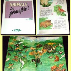 Animale in primejdie, ilustratii originale, brosura romaneasca 1978, WWF