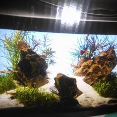 Vand acvariu - Acvariu si terariu, 50-60