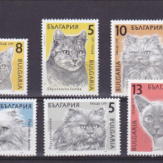 Animale pisici de rasa ,Bulgaria.