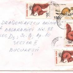 % plic-scrisoare-veverita, An: 1989